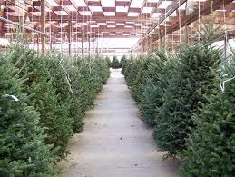 Krinner Christmas Tree Genie Xxl Uk by Sale On Christmas Trees Christmas Lights Decoration
