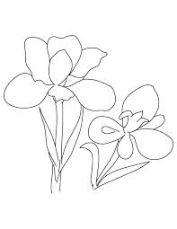 Two Iris Flower Coloring Page