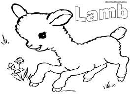 The Lamb A Is Baby Sheep And Are Very Social Animal In Grazing Situation They Need To See Other Will Become Highly