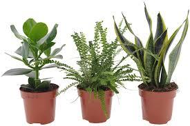 3x schlafzimmerpflanzen 3er set indoor grünpflanzen
