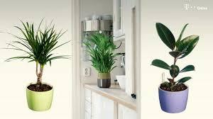 pflegeleichte topfpflanzen zehn robuste zimmerpflanzen für