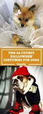 Halloween Trivia Questions And Answers For Seniors by 53 Funny Dog Halloween Costumes Cute Ideas For Pet Costumes