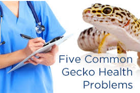 Crested Gecko Shedding Signs by 5 Common Gecko Health Problems Gecko Time Gecko Time