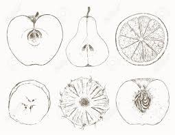 Half fruits Sketch of half fruits Fruit salad illustration of half fruits