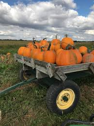 Pumpkin Patch Indiana County Pa by Smith Farms