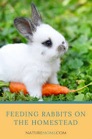 Can Rabbits Eat Roasted Pumpkin Seeds by Feeding Rabbits On The Homestead Nature Moms