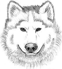 Printable Realistic Head Wolf Coloring Pages