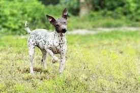 Dogs That Shed Little Hair by A List Of Small Dogs That Don U0027t Shed Unbelievable But True