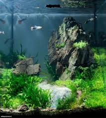 Amazing Aquascape Freshwater Gallery Ideas 12 - DecOMG Aquascape Designs For Your Aquarium Room Fniture Ideas Aquascaping Articles Tutorials Videos The Green Machine Blog Of The Month August 2009 Wakrubau Aquascaping World Planted Tank Contest Design Awards Awesome A Moss Experiment Driftwood Sale Mzanita Pieces Two Gardens By Laszlo Kiss Mini Youtube Warsciowestronytop