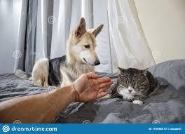 neugieriger hund schlafenkatze im schlafzimmer stockfoto