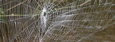 l araignée qui tisse sa toile sur 25 mètres vidéo etrange et