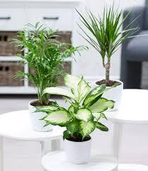zimmerpflanzen mix classic