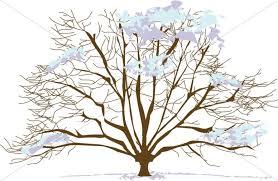 Snowy Winter Tree