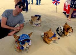 Corgi Beach Day Land of 1000 Corgis VIDEO – TRUE ADVENTURE