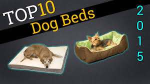 Top Rated Orthopedic Dog Beds by Top 10 Dog Beds 2015 Compare The Best Dog Beds Youtube