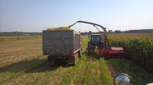 Chopping Corn Silage | Wisconsin Dairy Farmer Grain Silage Trucks For Sale Corn Silage Packing Time Lapse Case And John Deere B3 Farms Truck Driver Life On The Ranch Collins Family Silage Cy Harvesting 1976 Mack R600 Grain Farm Truck For Sale Auction Or Lease Intertional Wrecker Tow Trucks N Trailer Magazine 2006 Intertional Eagle 9200i Truck Item Dx9084 Oat Harvest 2013 What Goes Around Comes Mgaret Duarte Desert Survivor Bagging