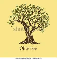 Olive tree with branches and berries logotype or banner Viscous oil mediterranean plant badge
