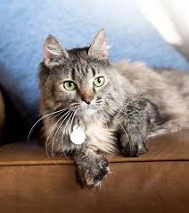 renal failure in cats cat kidney