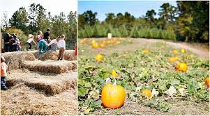 Motley Pumpkin Patch by 100 Motley Pumpkin Patch Little Rock Your Guide To Local