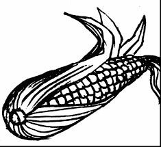 Corn Cob Coloring Pages And On The Page