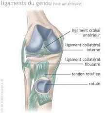 une blessure fréquente rotulien medisite