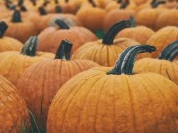 Pumpkin Patch Issaquah by Fall In Seattle Top Fall Time Activities In Seattle