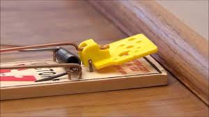 tom cat mouse trap victor easy set mouse trap