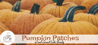 Pumpkin Farms Southern Illinois by Pumpkin Patches In And Around Lake County 2017 Little Lake County