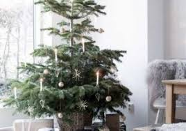 19 Best Christmas Tree Images On Pinterest Ideas Of Potted
