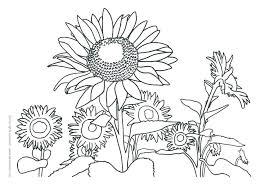 Sunflower Coloring Page S Simple