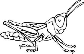 Happy Insects Coloring Pages Book Design For KIDS