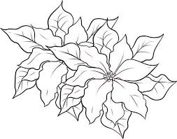Poinsettia Coloring Page PageFull Size Image