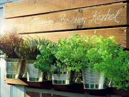 kräutergarten für die küche bauen selbermachen de