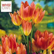 top 10 most expensive flowers in the world whizowl