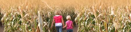 Pumpkin Farms Near South Milwaukee by The World U0027s Largest Corn Maze At Richardson Adventure Farm In