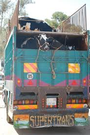100 Cow Truck Cowtruck Kahina Giving Beauty