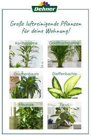 luftreinigende pflanzen pflanzen pflegeleichte pflanzen