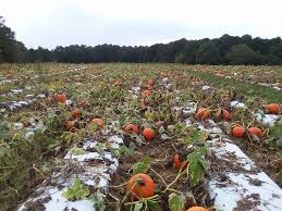 Pumpkin Patch Durham North Carolina by Page Farms Home Facebook
