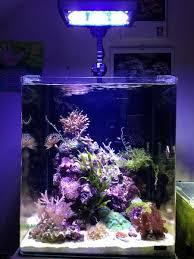 aquarium nano eau de mer aquariophilie forum recifal aquarium eau de mer forum redseamax
