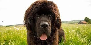 repulsif chien pour canapé canape repulsif interieur canape best of canys répulsif d