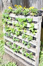 Pallet Strawberry Planter Added Pinterest February Is It Spring Field To Fork Ireland