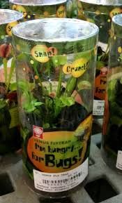check list for growing dionaea muscipula icps