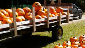 Bengtson Pumpkin Farm Chicago by Chicago Area Pumpkin Patches 40 To Choose From Chicago Tribune