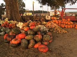 Pumpkin Patch Homer Glen Il by 11 Smashing Good Pumpkin Patches Mnn Mother Nature Network
