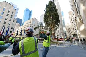 Rockefeller Christmas Tree Lighting 2016 by Christmas On The Way Rockefeller Center Tree Goes Up Nbc News