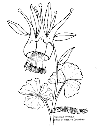 Aquilegia Formosa Western Columbine Line Drawing
