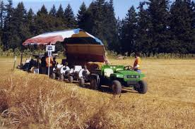 Canby Pumpkin Patch Train by Fir Point Farms
