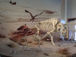 dinohyus terrible pig mount at agate fossil beds nm picture