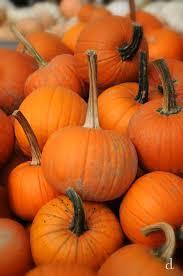 Pumpkin Picking Riverhead by Ponad 25 Najlepszych Pomysłów Na Pintereście Na Temat Apple
