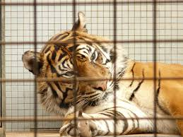 The Shortcomings Of The Animal Welfare Act In Effectively Protecting ...